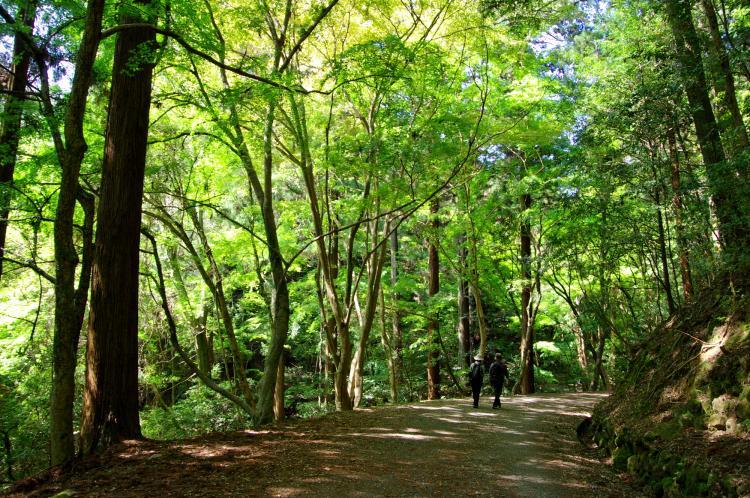 春日山原始林(奈良公園)
