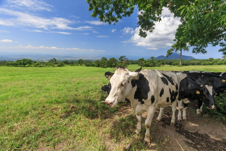 大山牧場牛奶的故鄉