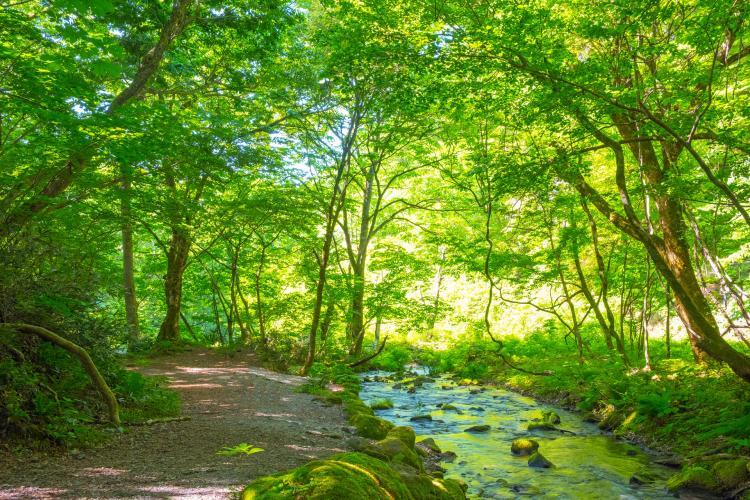 木谷澤溪流