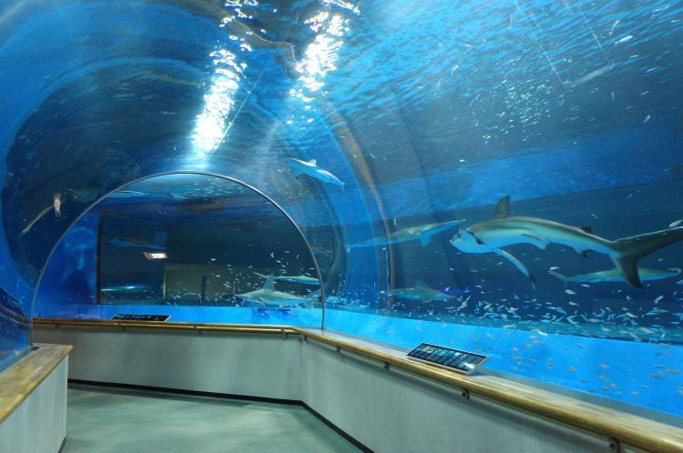 島根海洋館AQUAS