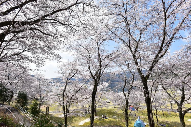 八千代湖(土師水庫)