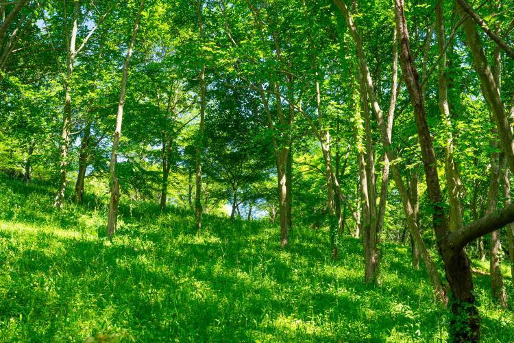 公渕森林公園