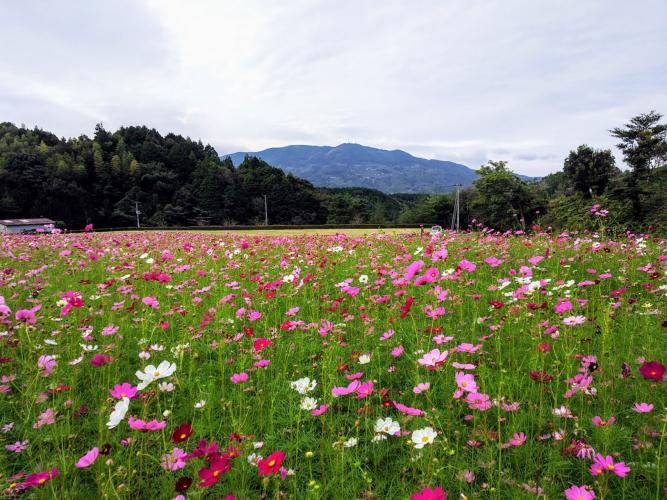 Flower Park大洲