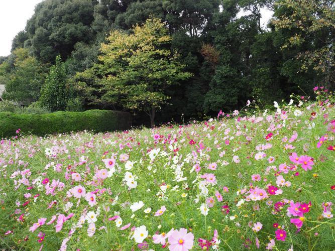 響灘綠地Green Park