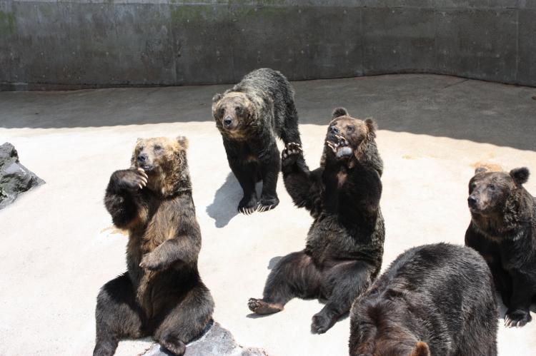 阿蘇卡德利動物樂園