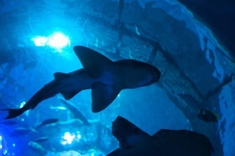 大分海洋宮殿水族館 海之卵