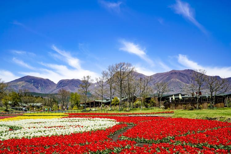 九重花公園