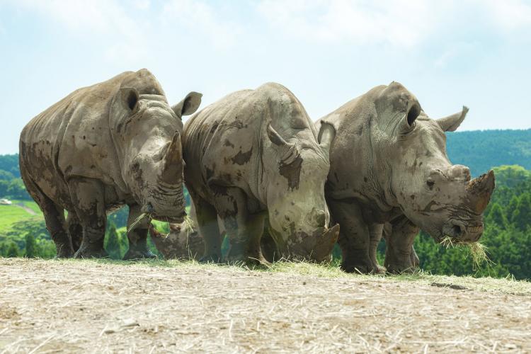 九州自然動物園 African Safari