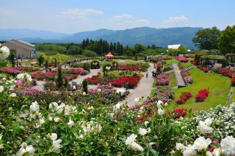 鹿屋玫瑰園