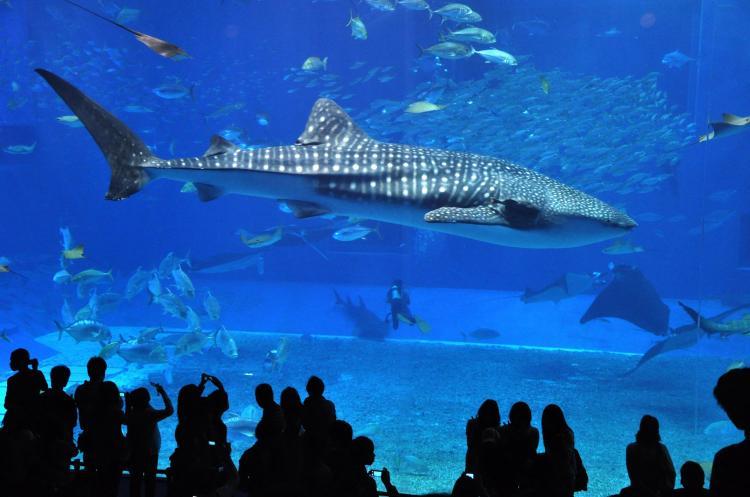 美麗海水族館(海洋博公園)