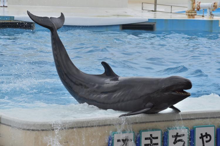 海豚劇場(海洋博公園)