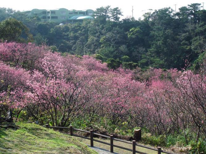 名護城公園(名護中央公園)